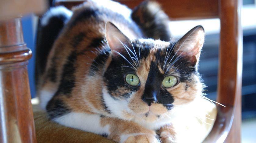 liloo sbe cat